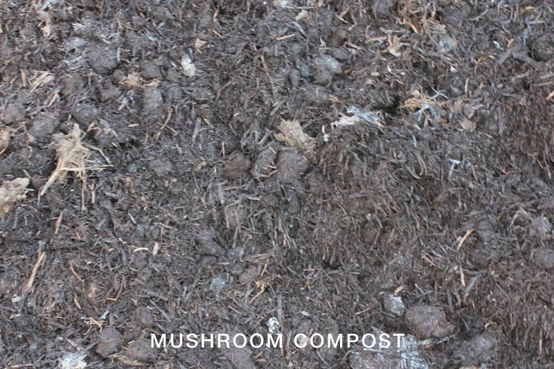 Compost toowoomba soil improvers earthlife garden mate for Mushroom soil